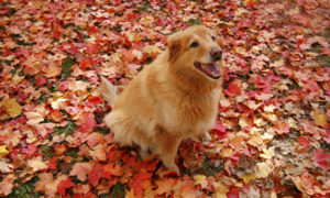 Orange Dog in Orange Leaves